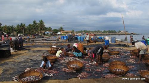 gvtp_srilanka00001