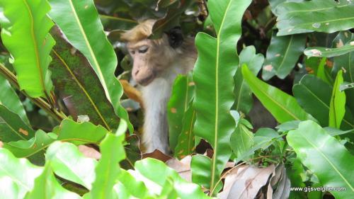 gvtp_srilanka00004