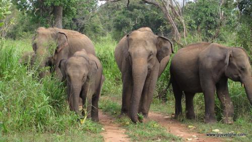gvtp_srilanka00005