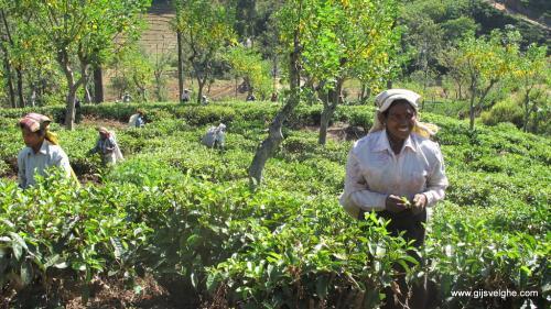gvtp_srilanka00019