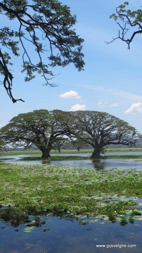 gvtp_srilanka00020